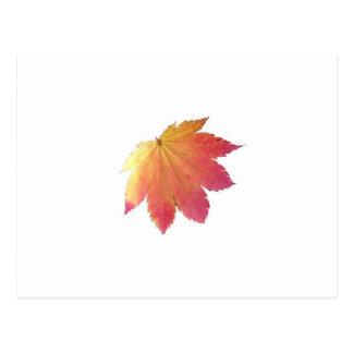 Autumn Colours Leaf Postcards