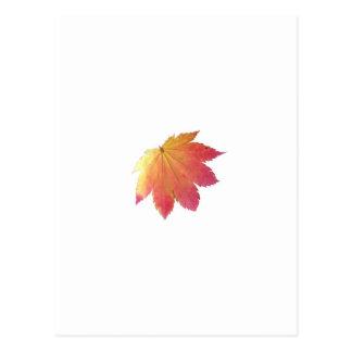 Autumn Colours Leaf Postcard