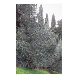 Autumn countryside with olive trees Tuscany, Italy Stationery