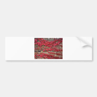 Autumn creepers bumper stickers