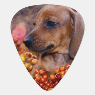 Autumn Dachshund Puppy Guitar Pick