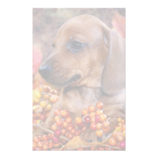 Autumn Dachshund Puppy Personalised Stationery