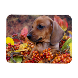 Autumn Dachshund Puppy Rectangular Photo Magnet