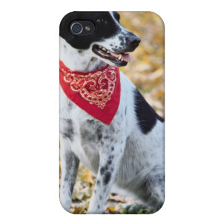 Autumn Dog iPhone 4 Cover