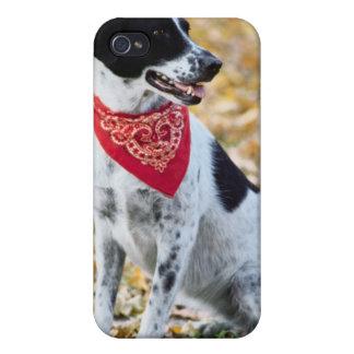 Autumn Dog iPhone 4 Cover