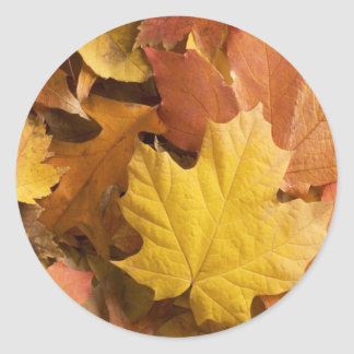 Autumn Fall Collection Golden Leaves Stickers