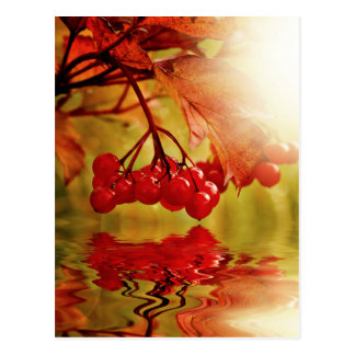 Autumn Fall Colorful Leaves Tree Leaf Park Forest Post Card