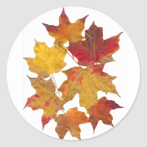 Autumn Falling Leaves Round Sticker