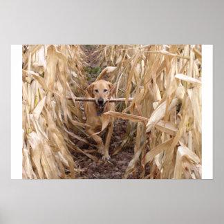 Autumn Fetch Poster