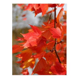 Autumn Fire Postcard