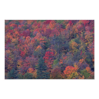 Autumn foliage of a mixed hardwood forest posters