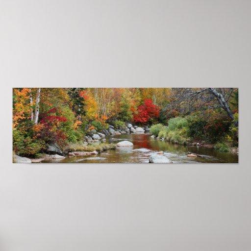 Autumn Foliage Print