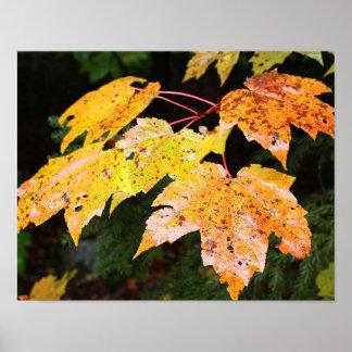Autumn Foliage Posters