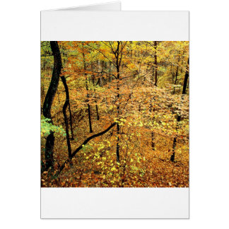 Autumn Forest Percy Warner Park Cards