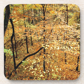 Autumn Forest Percy Warner Park Beverage Coasters