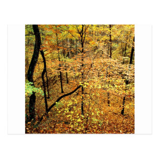Autumn Forest Percy Warner Park Post Card