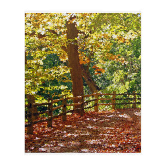 Autumn Forest Trail Acrylic Print