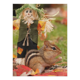 Autumn Fun Little Chipmunk Poster