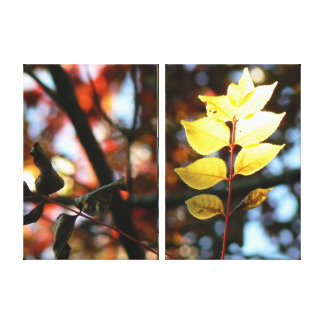 Autumn golden ash leaf canvas print