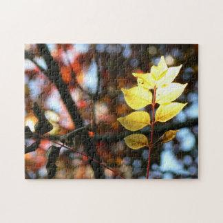 Autumn golden ash leaf jigsaw puzzle
