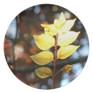 Autumn golden ash leaf plate
