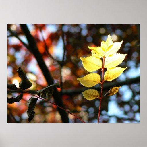Autumn golden ash leaf poster