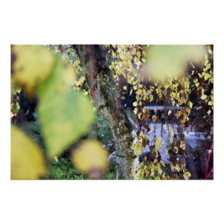 Autumn Golden Branches + Leaves Posters