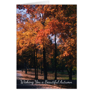 Autumn Greetings, Colorful Fall Tree Landscape Card