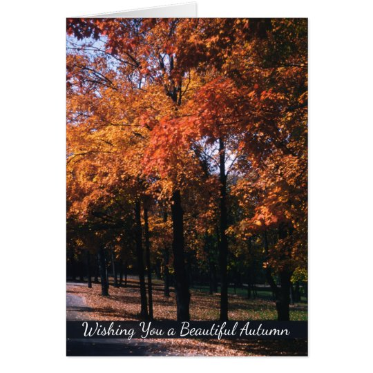 Autumn Greetings, Colourful Fall Tree Landscape Card