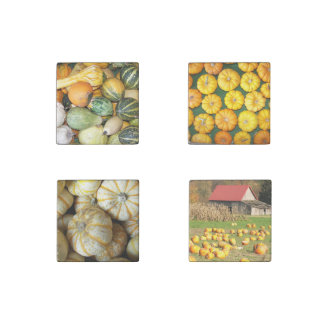 Autumn Harvest Squash Photo Stone Magnet