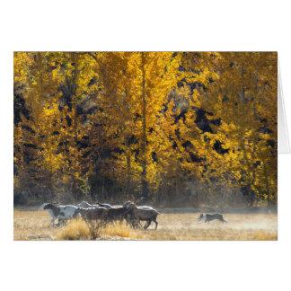 Autumn Herding Card