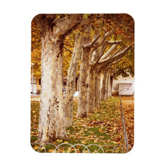 Autumn in an urban park rectangular photo magnet