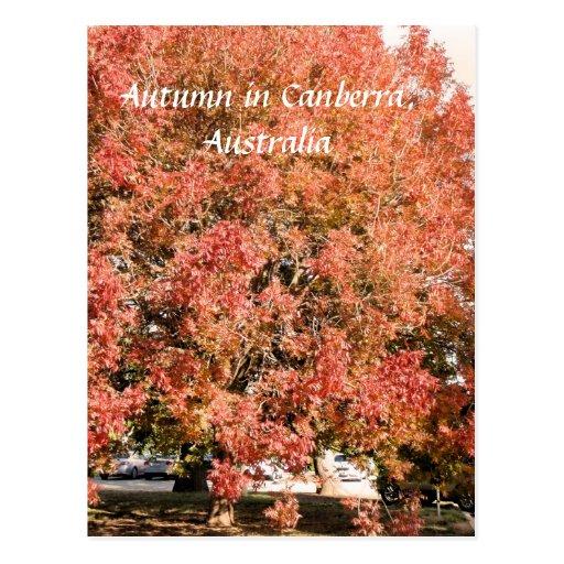 Autumn in Canberra, Australia postcard
