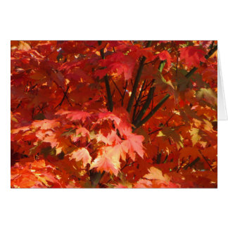 Autumn in Canberra Greeting Card