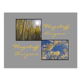 Autumn in Flagstaff Postcard
