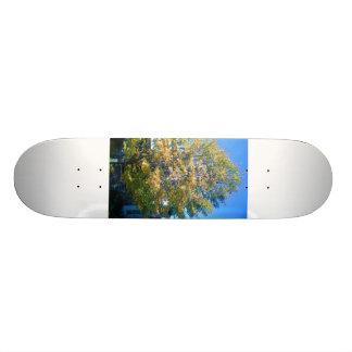 Autumn in New York Skate Board