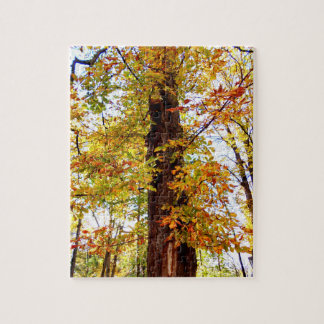 Autumn In The Forrest Jigsaw Puzzle