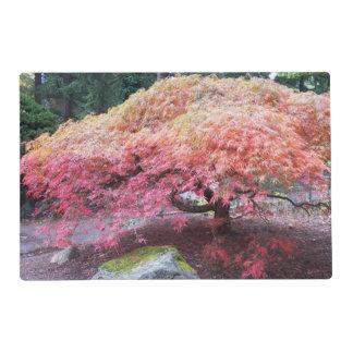 Autumn Japanese Maple Tree Photo Laminated Place Mat