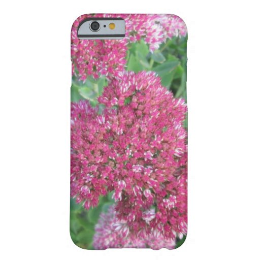 Autumn Joy Sedum Red Pink Cluster Flower Barely There iPhone 6 Case