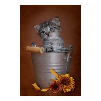 Autumn Kitten Poster