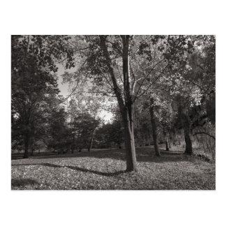 Autumn Landscape Bute Park Cardiff Postcard
