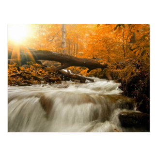 Autumn landscape with trees, river and sun postcard