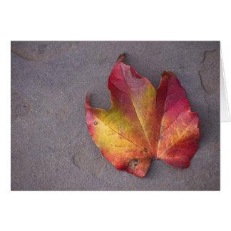 Autumn Leaf (1) Greeting Card