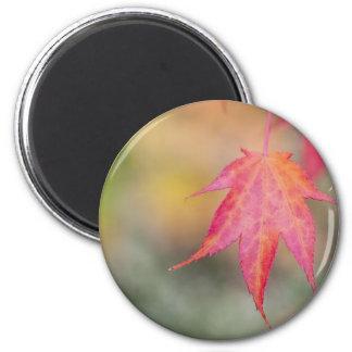 Autumn Leaf 6 Cm Round Magnet