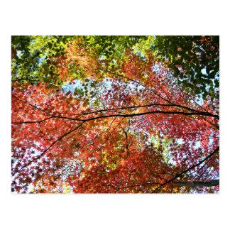 Autumn Leaf Canopy: Japan Postcard
