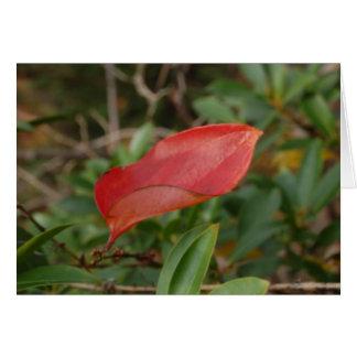 Autumn Leaf Cards