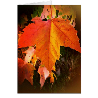 Autumn Leaf Card, white envelopes included Card