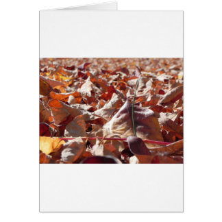 Autumn leaf in the fall card
