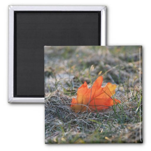 Autumn Leaf in the Grass Refrigerator Magnet