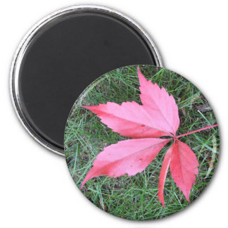 Autumn leaf fridge magnets